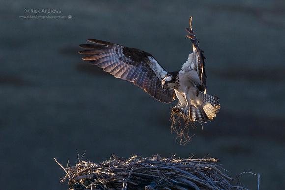 Osprey-0281