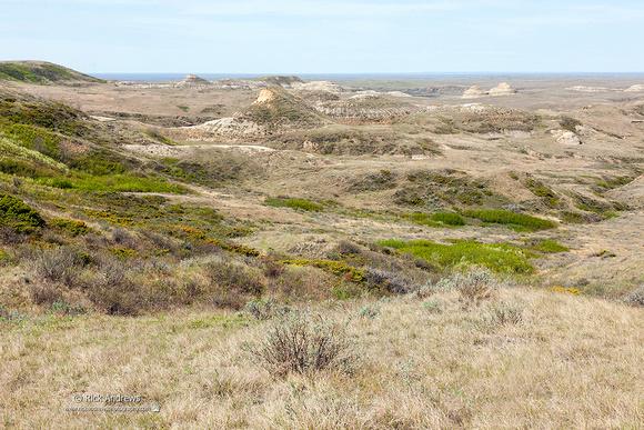 Grasslands NP-0231